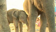 Záplavy uvěznily slony, slůně ale přineslo naději