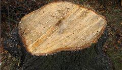 Ke kácení stromů na zahradách nebude třeba povolení. Ochránce novela děsí
