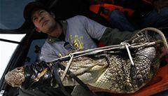Po záplavách další hrozba, Thajsko čelí krokodýlům s hady