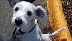 Vědci rozluštili genetický kód psa