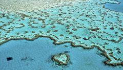 Velký bariérový útes má vlastní spermabanku
