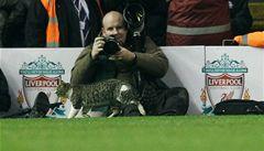 Nová hrdinka Liverpoolu? Kočka z Anfield Road