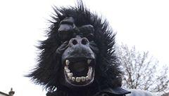 Kauza Gorila: vyšetřování obří korupční aféry je na mrtvém bodě