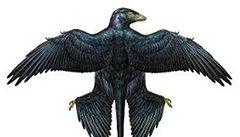 Ptačí dinosaurus používal lesklé peří ke svádění