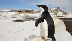 Antarktida byla podle vědců před miliony let teplejší