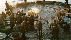 Rybáři loni vylovili 21 tisíc tun ryb. Nejvíce od roku 2004