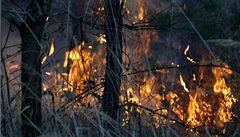 Hasiči uhasili les u Brna, hořel celou noc