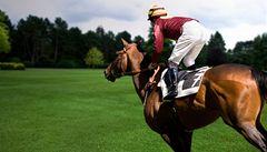 Brněnští vědci zkoumají vliv ostropestřce mariánského na zdraví závodních koní