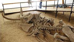 Vědci se blíží k oživení mamutů, analyzovali nové vzorky DNA