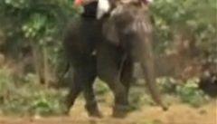 Slon v Indii vzteky udupal svého majitele