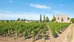 Vinaři z Bordeaux mají špatný rok. Prudké bouře poničily celé vinice