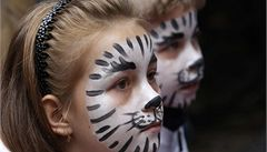 Do liberecké zoo přišlo pokřtít tygří trojčata kolem 3000 lidí