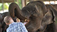 Slonice ze Srí Lanky si zvykají na život v Praze