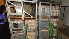 Kontroly vracejí hlavně dovážená vejce a drůbež. Nejčastěji do Polska