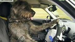 Pes zvládl autoškolu a naučil se řídit auto