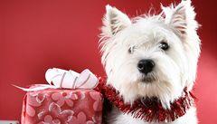 Tipy na dárky, aby ani domácí mazlíčci nepřišli na Vánoce zkrátka