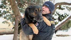 Mimořádný výkon: pes stopoval zloděje tři kilometry v náročném terénu
