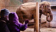 Pražská zoo je čtvrtá nejlepší na světě. Vyhrálo San Diego