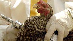 V Kanadě zemřel první člověk na ptačí chřipku, nedávno byl v Číně