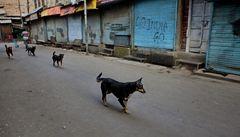 Indický toulavý pes ukradl tašku se 400 000 rupií