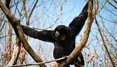 Opice umějí podle vědců 'předvídat' budoucnost