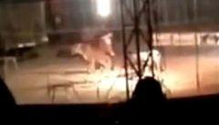 Tygr roztrhal krotitele přímo před očima diváků