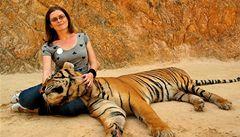 Mazlení s tygrem nebo pozorování goril. Tipy, kam vyrazit za zvířaty