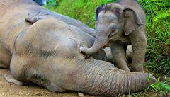 114 mrtvých slonů. Keňská policie zabavila dvě tuny slonoviny