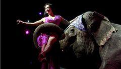 Z belgických cirkusů zmizí divoká zvířata