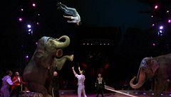 Cirkusy sepisují petici. Chtějí mít pod šapitó i hrochy a žirafy