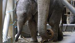 Zoo Praha otevřela pavilon Údolí slonů. Stál půl miliardy korun