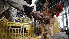 Zákaz obchodu s živou drůbeží. Čína bojuje proti ptačí chřipce