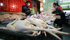 Hongkong hlásí další oběť ptačí chřipky, Čína se bojí epidemie