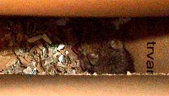 Zlínský Interspar je opět zavřený, na inspektory vykoukla živá myš