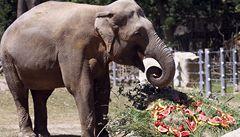 Slon Mekong z pražské zoo by mohl mít potomka. Chovatelé ho pustili k samicím