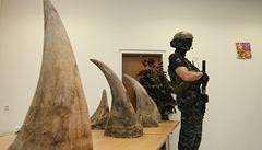 S pašováním rohů pomáhali čeští lovci, popisují celníci svůj 'největší úlovek'