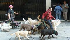 Kočky na hřbitově a smečky psů. Vítejte v Buenos Aires