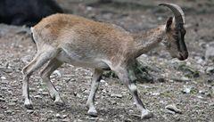 Olomoucká zoo otevřela první část safari