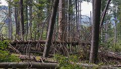Žofínský prales je nepřístupný. Jeho okolí ale turisty láká