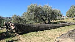 Život na farmě vyrábějící tekuté zlato jménem olivový olej