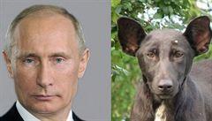 Muž našel psa, který vypadá jako Putin