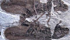 Vědci našli nejstarší fosilii pářícího se hmyzu