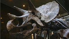 V USA se budou dražit dva dinosauři. Pošli ve smrtelném objetí