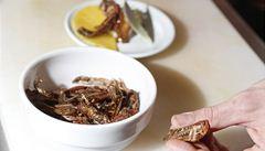 Američané objevují kouzlo hmyzí gastronomie