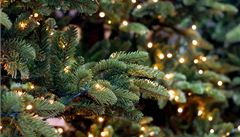 Pět rad, díky kterým váš stromeček déle vydrží