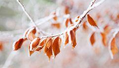 V prosinci velké mrazy nečekejte. Bude většinou kolem nuly
