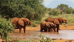 Po stopách UNESCO: Národní park Tsavo East a naše zmizelé auto