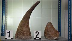 Rentgen v Ruzyni odhalil pašované rohy nosorožce za sedm milionů