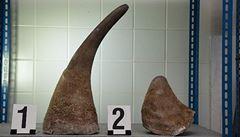 Důmyslná skrýš. Celníci našli rohy nosorožců v cívkách s kabelem