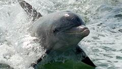 Delfín z Besonovy Magické hlubiny uhynul